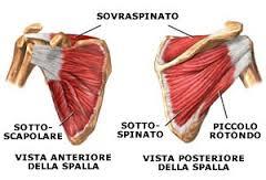 Anatomia della spalla Anatomia della spalla Lesione cuffia dei rotatori  Lesione cuffia dei rotatori. La spalla è composta da varie articolazioni ... 8684fdde7dda